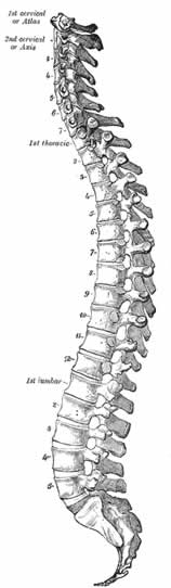 Bowen Technique Therapy for your Spine